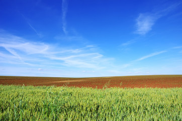 Texture of Green and arable field, under the bright sky.