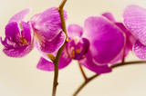 flowers, orchid, isolated, flower, nature, plant, petal
