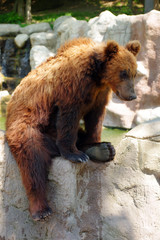 bear Kamchatka 3