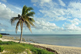 Coconut palm trees at empty tropical beach of Bahamas