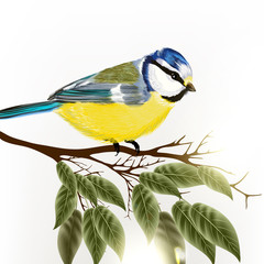 Background with vector detailed bird