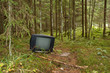 TV in a forest