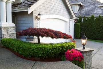 Blooming Japanese Maple Tree in front of home