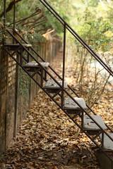 Old step ladder