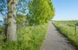 Sunny landscape in spring