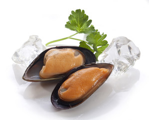 Mussel on the shell