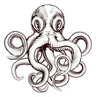 Octopus illustration - 65058567