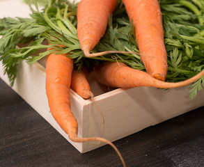 Carrot in wooedn box