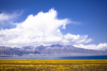 The image of landscape