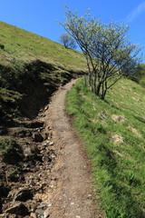 sentiero per il monte Bolettone