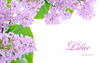 Lilac flowers