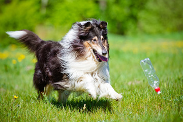 dog playing with a bottle