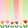 Colorful tulip vector background