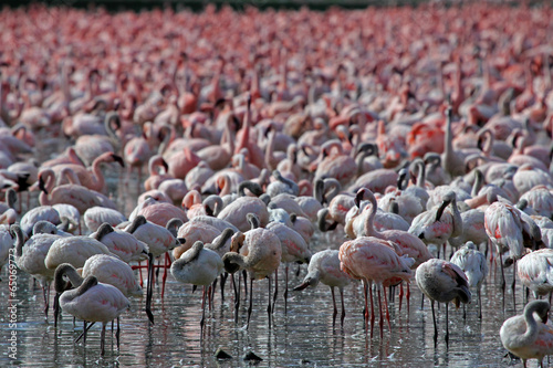 Fotobehang Flamingo Flamingos am Lake Naivasha, Kenia