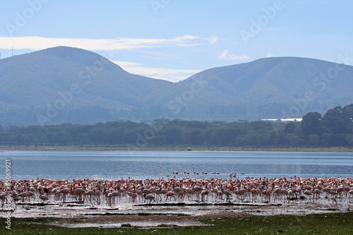 Papiers peints Flamant Flamingos am Lake Naivasha, Kenia