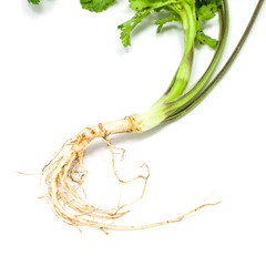 Coriander root isolated on white background