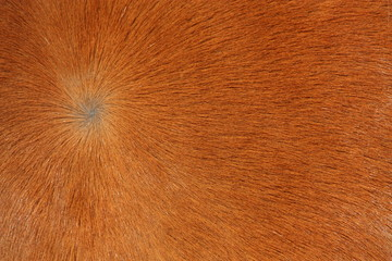 Close up of brown horse fur
