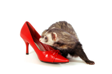 furet et chaussure rouge