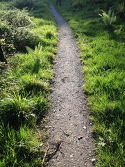 path through grass
