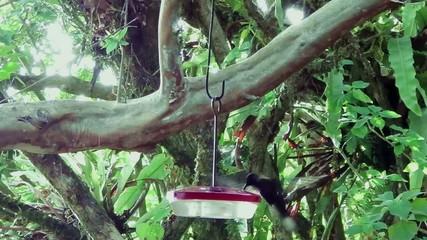 Kolibri trinkt aus einem Behälter mit süßer Flüssigkeit