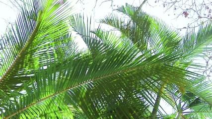 die Sonne scheint durch Palmenblätter