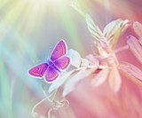 Beautiful butterfly illuminated with sunny beams