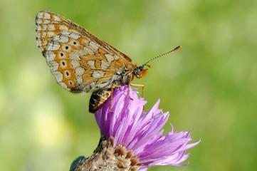 le réveil d'un papillon