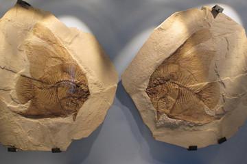 bolca museo dei fossili pesci pietrificati verona