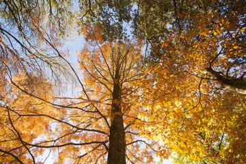 Backlit autumn colors.
