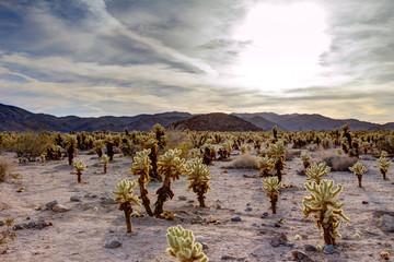 Surreal Desert Cactus Landscape