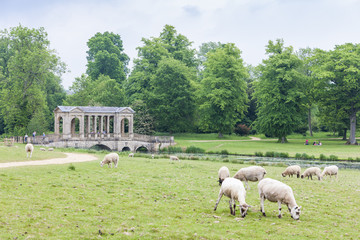 sheep with Palladin Bridge at background, Stowe, Buckinghamshire