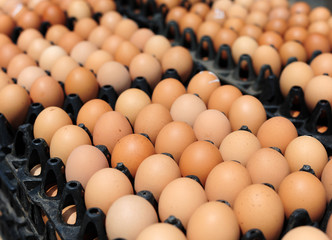 Plastic crates with fresh white and brown eggs on an organic