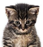 kitten - 65092985