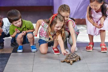 Kinder streicheln Schildkröte im Kindergarten