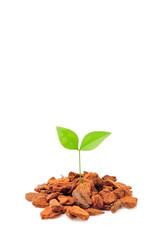 茶色い土と緑の新芽