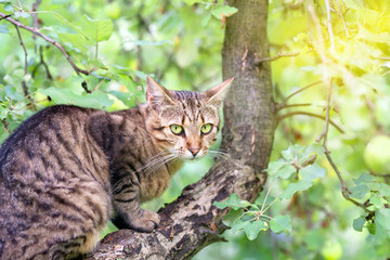 Cat sneaking on the tree in the garden