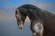 Black horse on the storm clouds background