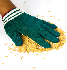 farmers wear gloves and rice grain