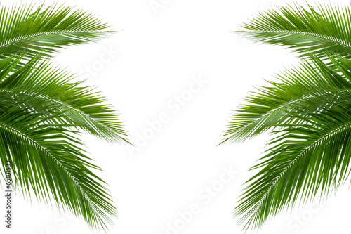 Papiers peints Palmier leaves of coconut tree isolated on white background