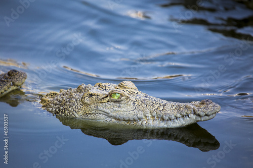 Spoed canvasdoek 2cm dik Krokodil Aggressives, aber schönes Krokodil