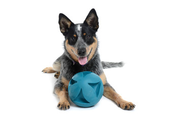 Puppy Ball