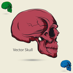 Human skull in profile. Vector illustration.