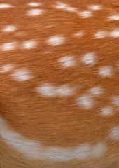 sika deer fur