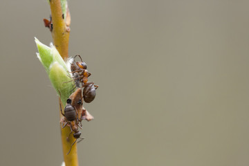 Brown insects on a tree spray