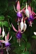 canvas print picture - les floralies de nantes