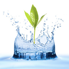 Water splash with leaf growing