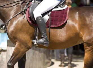 Horsewoman on horse