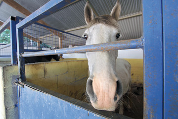 Cabeza de caballo, Aldea Juglar, Barrado, España