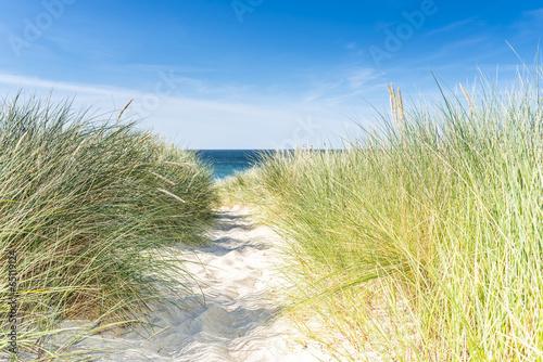 Dune with beach grass close-up. - 65119124