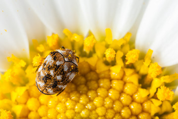 Bug and pollen
